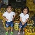 黃家柿子(3.1ys)