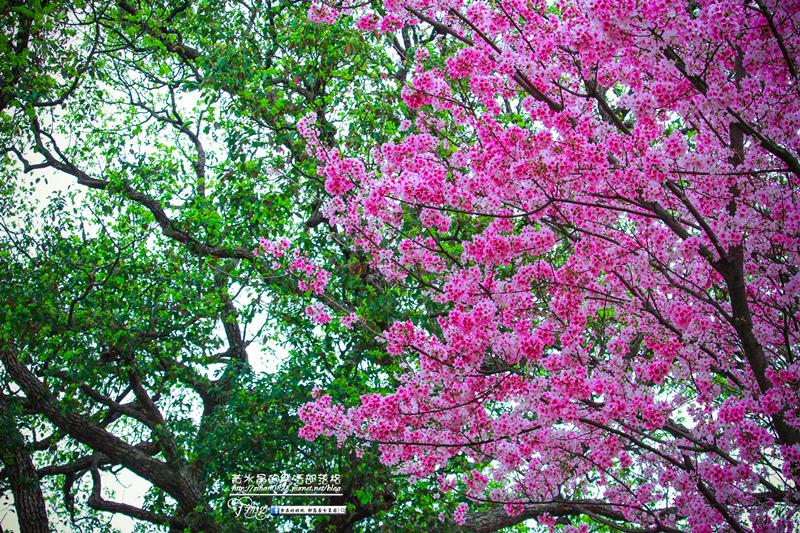 淡水無極天元宮【新北廟宇景點】