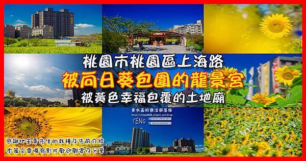 上海路向日葵001.jpg