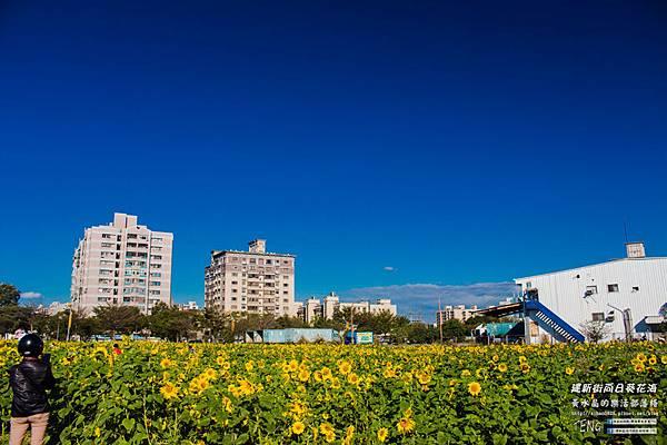 建新街向日葵002.jpg