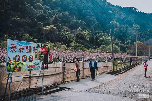 泰安派出所櫻花季041.jpg