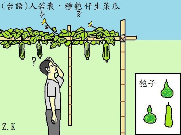 生菜瓜.jpg