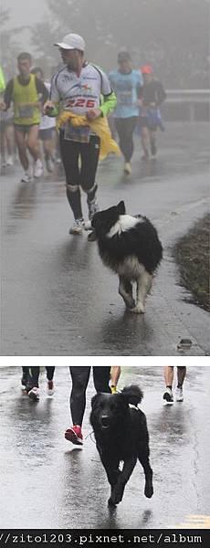 『2012第四屆雙溪櫻花馬拉松,朦朧的櫻花好硬的山路!』 (15)