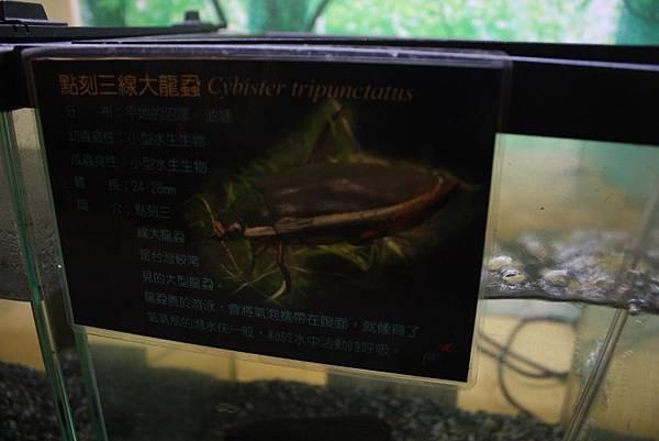 台灣昆蟲館 龍蝨