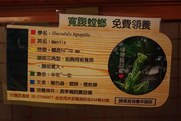 台灣昆蟲館 螳螂領養