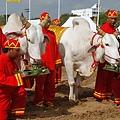 泰國皇家耕種大典暨農民節(Royal Ploughing Ceremony and farmers day)