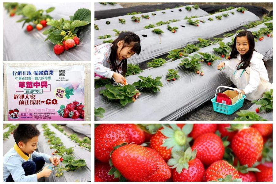 南投景點-中興草莓園
