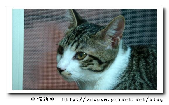 DSC00784.jpg
