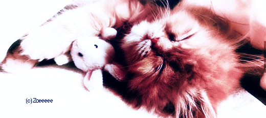 150115 Cat.png