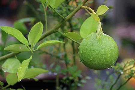 lemon-1021634_960_720.jpg
