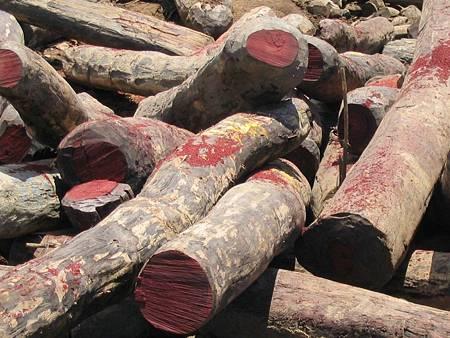 rosewood-1024x768.jpg
