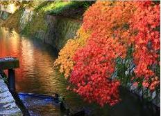 日本京都的哲學之道,保持自然的水圳,並在兩旁種滿樹木