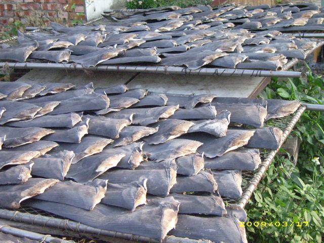 2008年香港進行市場抽查發現,10個魚翅有8個含水銀等重金屬汙染。攝影/台灣動物社會研究會