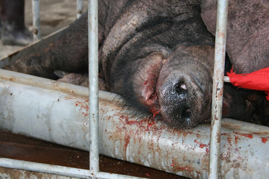 圖片來源:台灣動物社會研究會