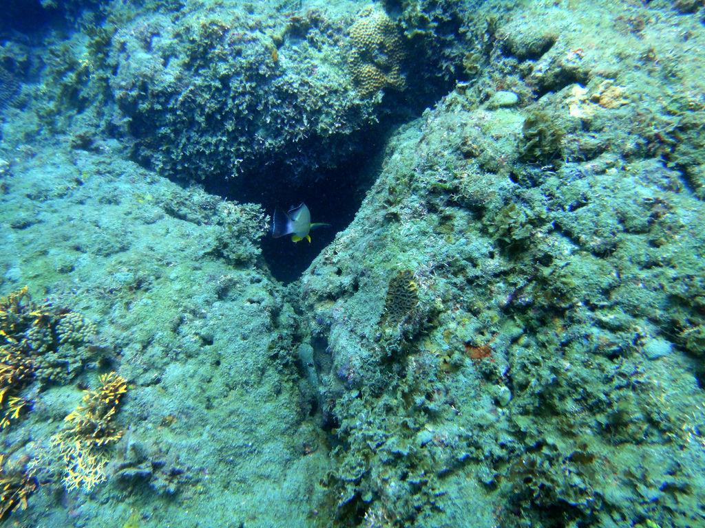 杉原珊瑚礁遭受沉積物覆蓋,魚兒無以為家_楊明哲攝.JPG
