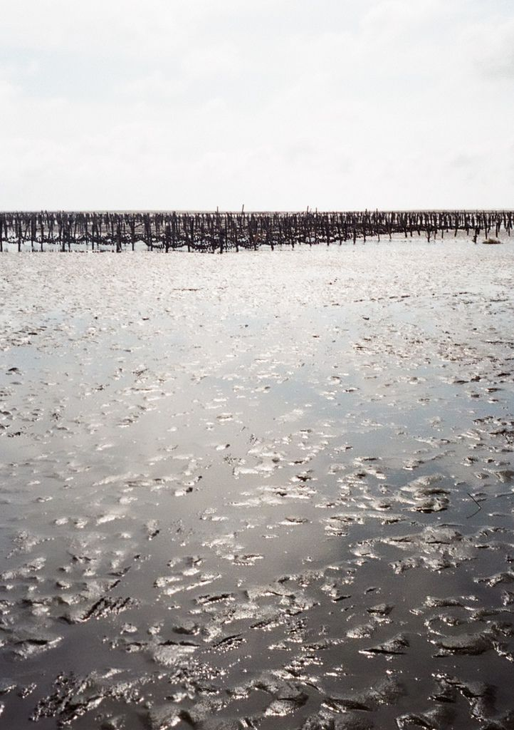 濁水溪北北側的大城濕地,不知是否會因為中科污水受到傷害