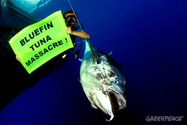bluefin-tuna-massacre