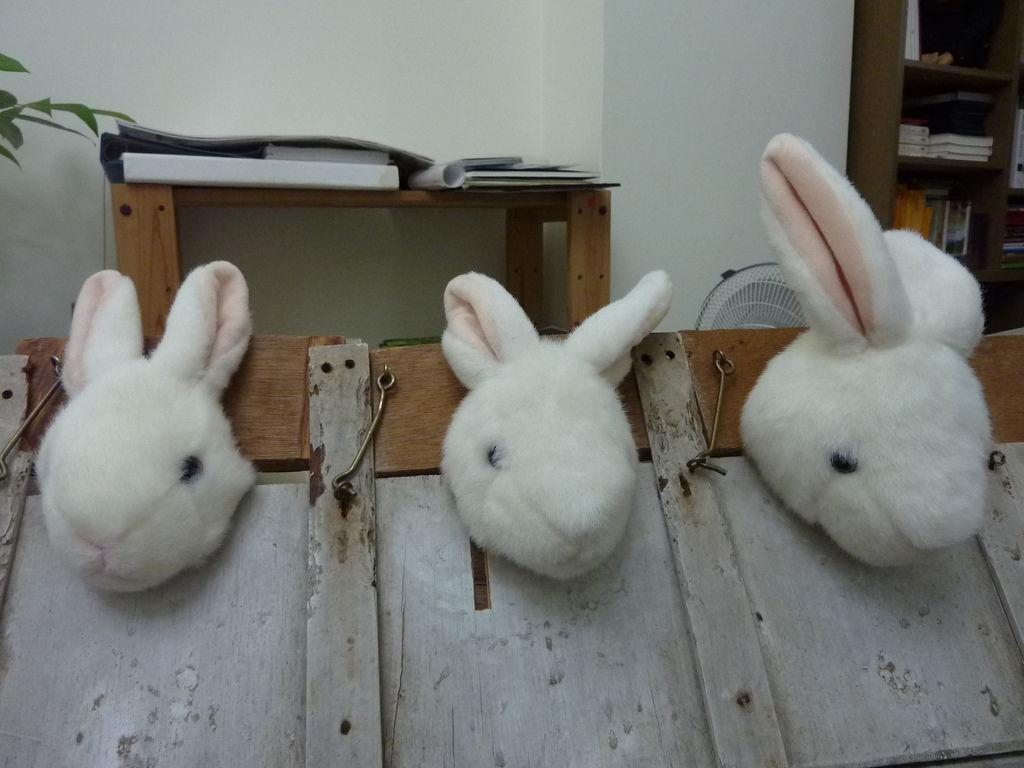 P1070734(模型兔)