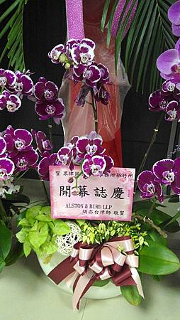 ALSTON & BIRD LLP 胡亦台律師.jpg
