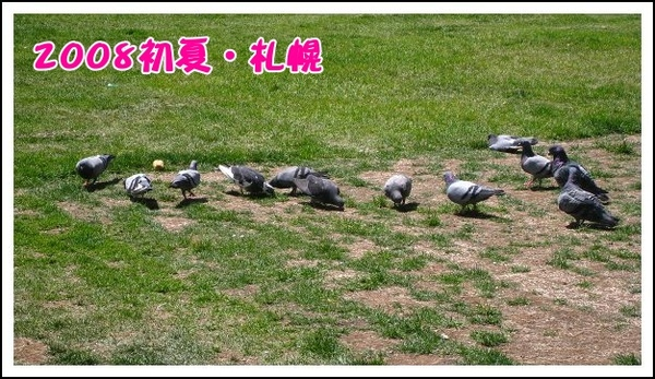IMG_6517.jpg