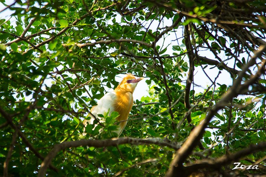 黃小鷺-2.jpg
