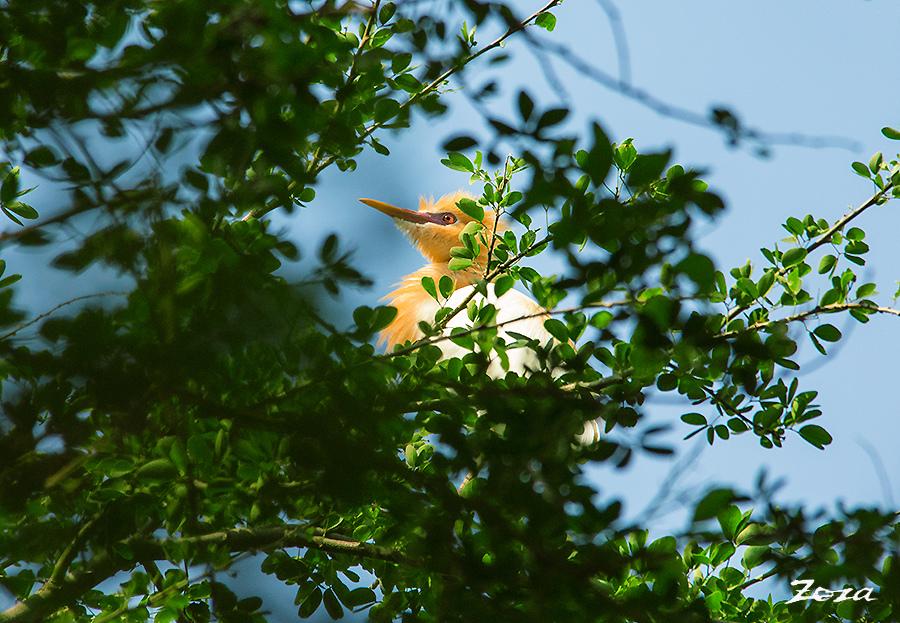 黃小鷺-3.jpg