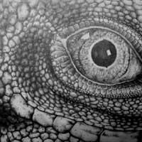 【插圖_素描】蜥蜴