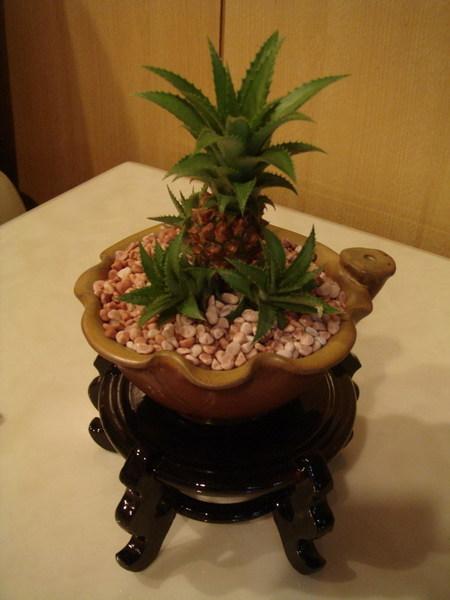 夏威夷空氣鳳梨小盆栽~好運旺旺來