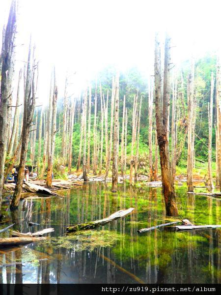 20111022南投忘憂森林