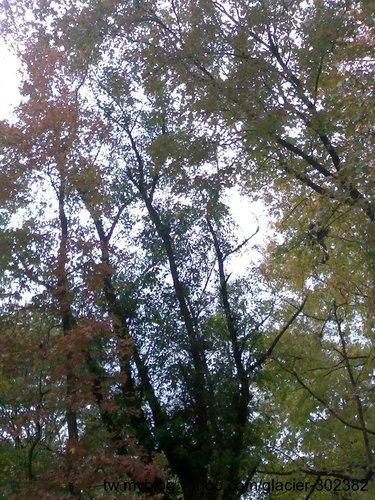 處處是楓情 ~ 北投復興公園20110104