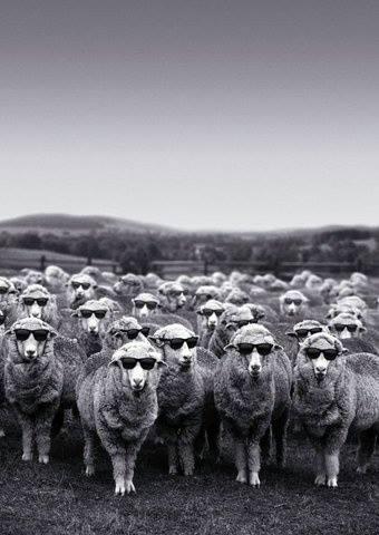 羔羊的說服力