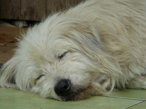 幸福的狗狗
