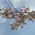 [04/02] 春天到了