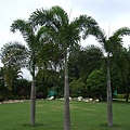 [07/20] 社區裡的椰子樹