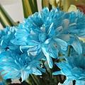 [08/24] 藍白混色的菊花 @BPH