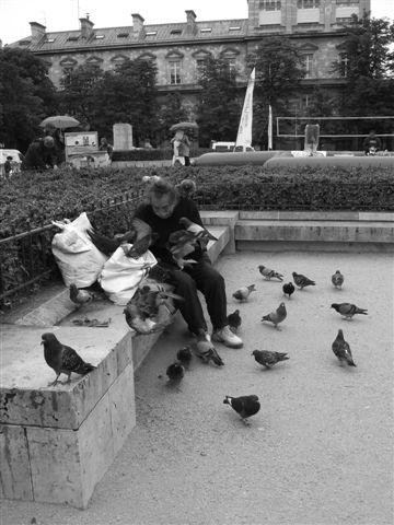 餵鴿的老人