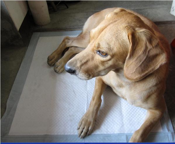 哈比狗狗3