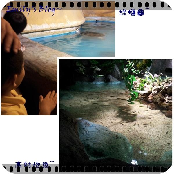 sea park 6