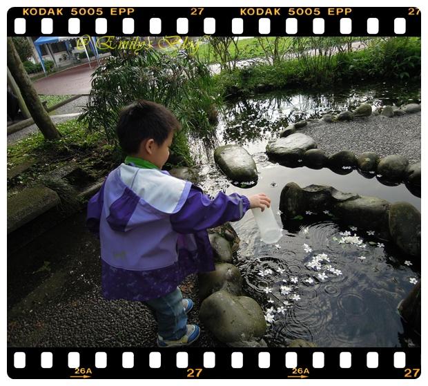 20130426  石碇賞桐花 & 螢火蟲 059